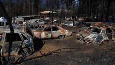 En las zonas de los incendios, no sólo se está trabajando para ayudar a familias y productores, sino también recuperar los bosques nativos.