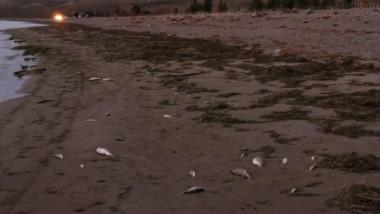 Los peces muertos a lo largo de la costa del lago dispararon la alerta.