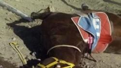 """""""Milito"""" murió instantes después de coronarse ganador de la tercera carrera disputada en el hipódromo de la ciudad de Neuquén."""