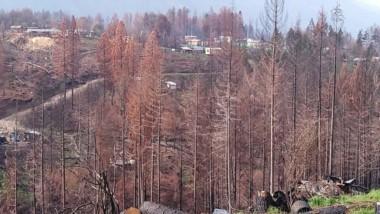 Todo arrasado. Los incendios en la Comarca Andina generaron una catástrofe en toda la zona.