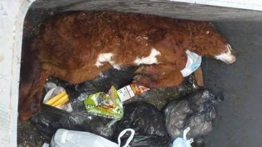 Tremendo. Encontraron un animal muerto en un contenedor.