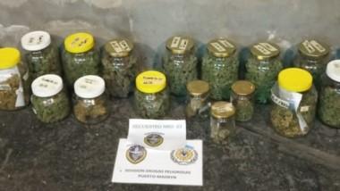 Policía secuestró plantas de marihuana. Investigan si las vendía.