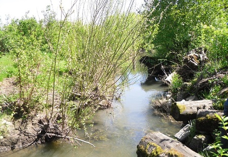 Stream enhancement to promote wildlife habitats  portland  us
