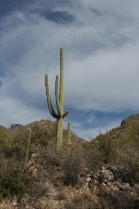 Polarized saguaro