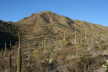 A last look at Wasson Peak