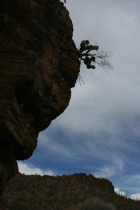 Horizontal cactus
