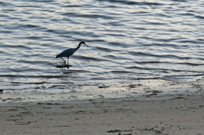 Crane on the shore