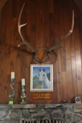 Shrine to Stanlee, the white horse