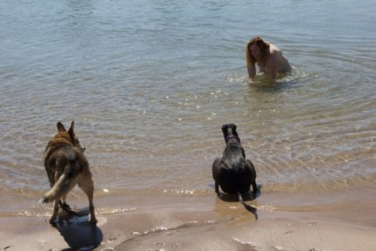 Enticing the dogs into the water