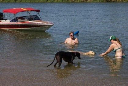 The dogs happily in the water at last
