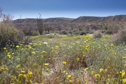 Part of the swelling superbloom
