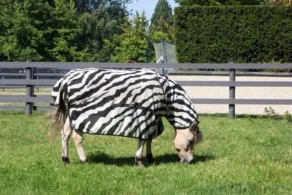 Zebra spotting!