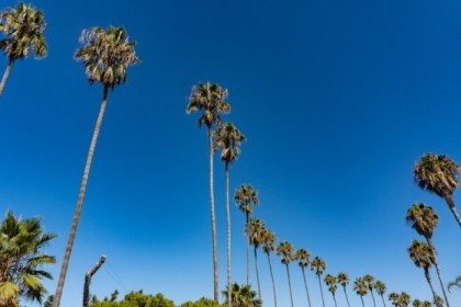 Palms on Coast Blvd