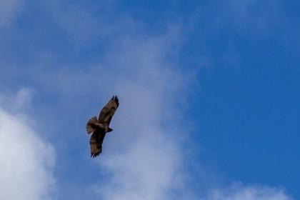 Circling overhead