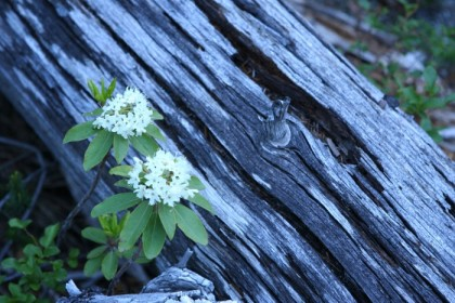 Log and flowers