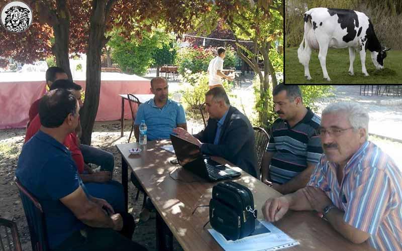"""Türk Bilim İnsanları, Yaptığı Araştırmayla Büyük Oyunu Bozdu: """"Hollanda İneğinin Sütü Kanser Yapıyor..."""""""