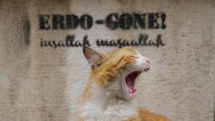 Trafoya giren örgüt mensubu kedilerin subliminal mesajları gazeteniz Sabah'ta...