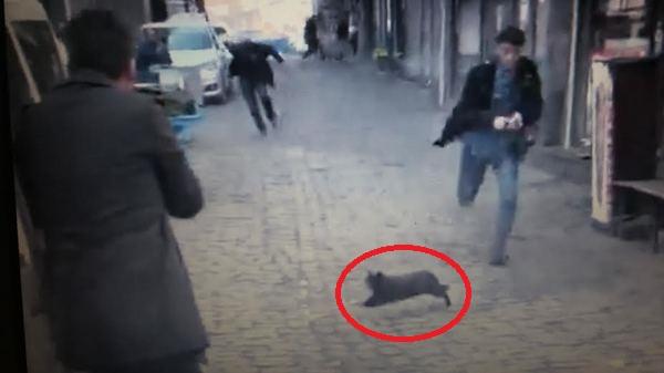 Tahir Elçi cinayetiyle ilgili tüm görüntüleri inceleyen Emniyet, o kedinin peşine düştü...