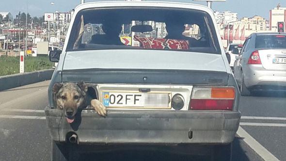 Bozulan stop lambası yerine köpeğini koyan Adıyamanlı Ahmet K., diğer sürücülerin sesli sinyali anlamamasından şikayetçi...