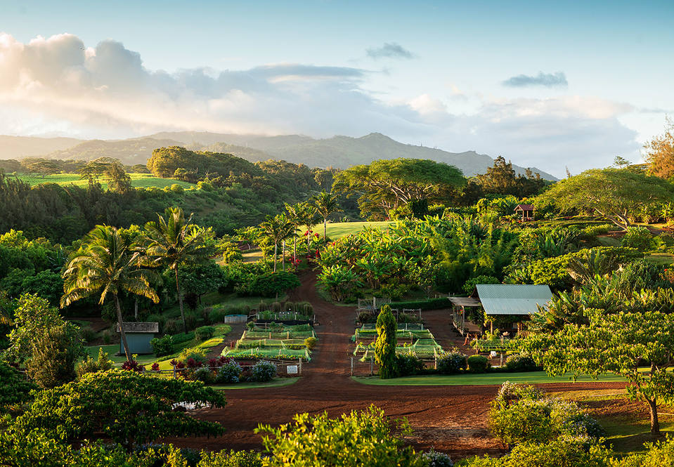 1. kukui'ula farm.brent herrington