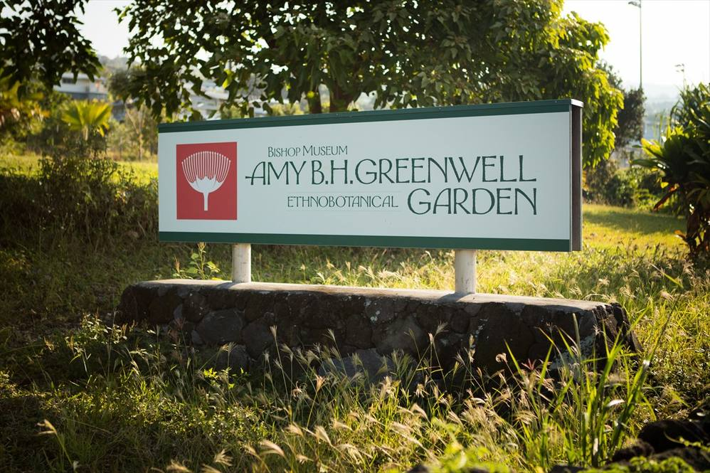 Amy B.H. Greenwell Ethnobotanical Garden, Captain Cook, Hawaii Island