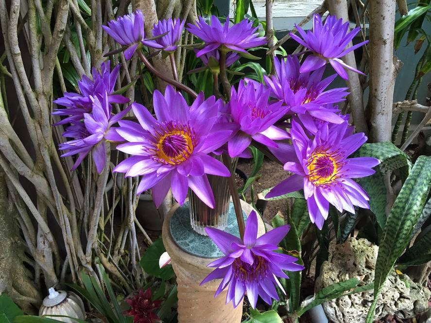 Purple lilies large 1