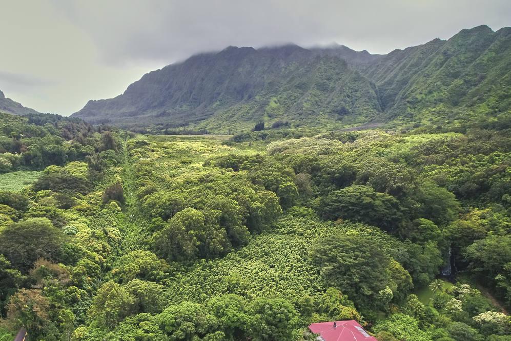 Nuuanu pali drive honolulu hawaii01