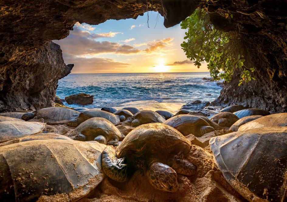 Turtle cave   39 papaua