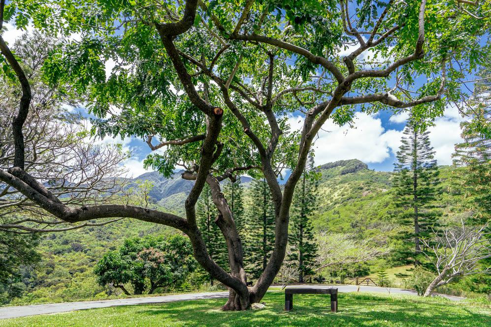 09. peaceful lush setting 67 290 farrington hwy