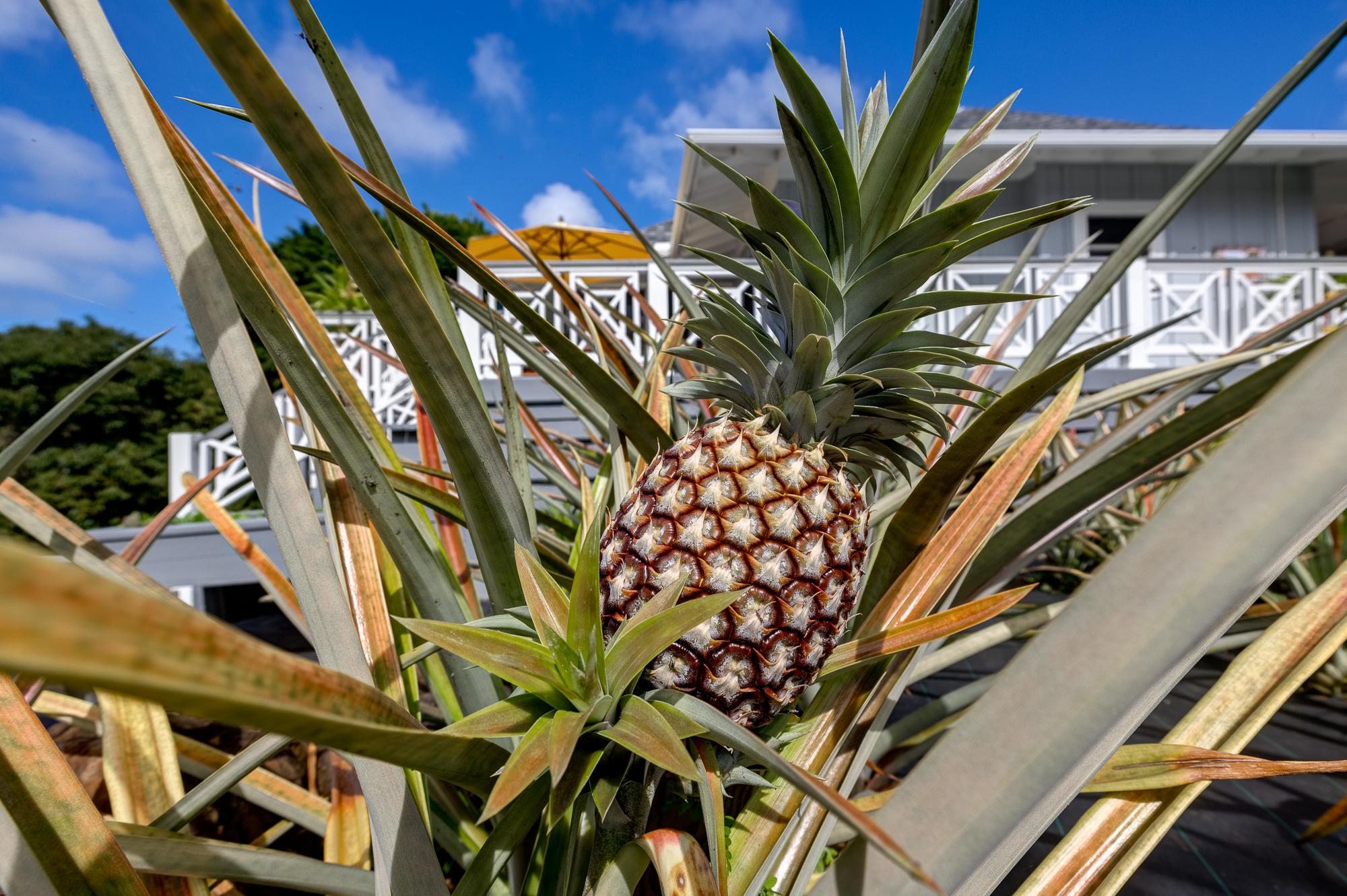 pineapple farm 7475-E Koolau Road in kauai hawaii luxury home