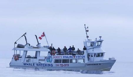 bc-tofino-whale-vessel