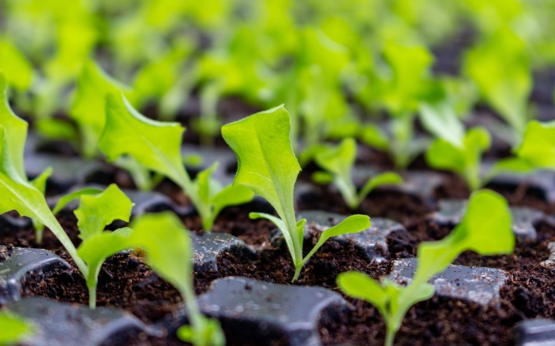 Risky Business: Church Transplanting vs. Planting