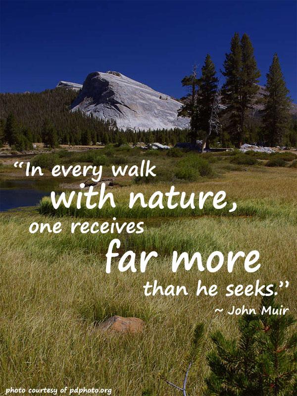A Walk In Yosemite Park