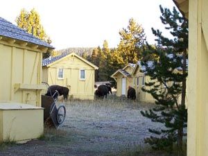 yellowstone lake hotel cabins