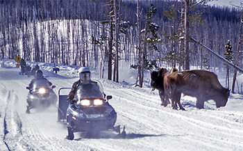 Snowmobiles and Bison in Yellowstone National Park