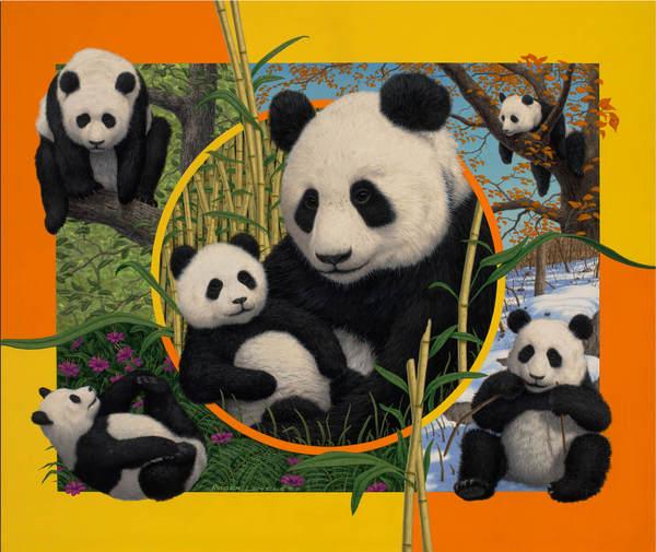 Season for Panda's