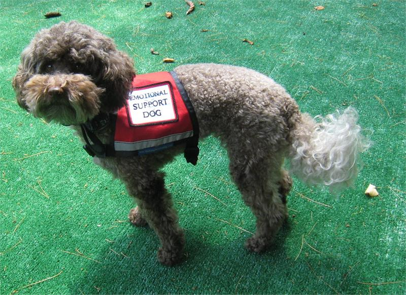 Image of: Mesh Vest Emotionalsupportdogjpg Fedsmithcom Why Are There So Many Service Animals