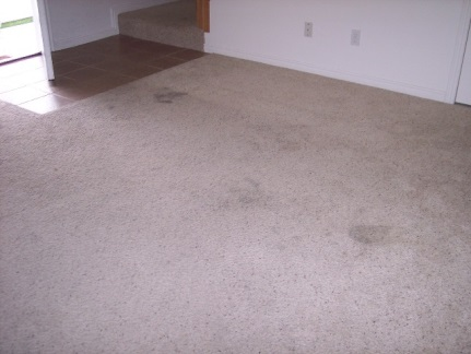 stained-carpet