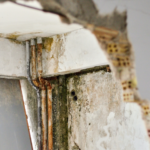 When Should You Be Concerned About Mold in Your Rental Property?