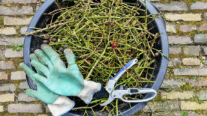 Bucket with Gloves and Pruning Tools