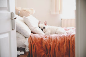 White French Bulldog Sleeping on Bed in Loganville Rental