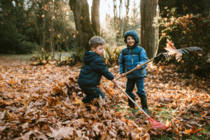 A Pair of Boys Raking Up the Autumn Leaves in Auburn