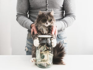 Grafton Tenant with a Piggy Bank and a Cute Cat