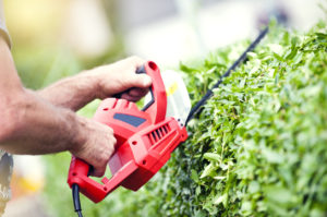 "man or someone with ""manish hands"" trimming a hedge with electric trimmer"
