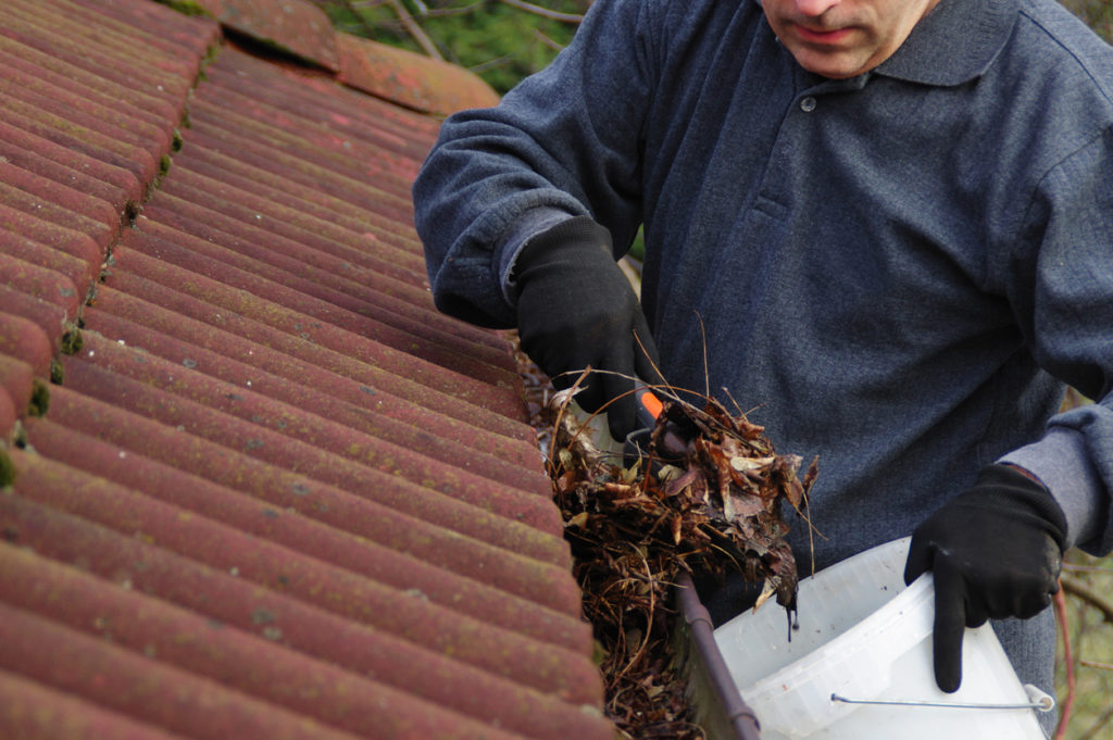gloved man cleaning dirty gutter containing matted and moist leaves from the winter's thaw