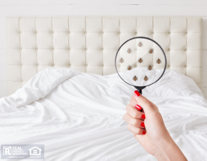 Hand holding a magnifying glass to demonstrate a bed bug infestation