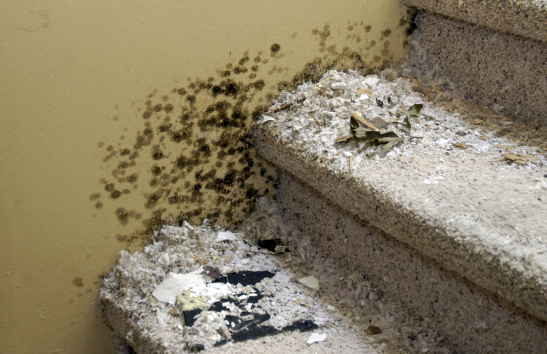 Mold on the Stairs