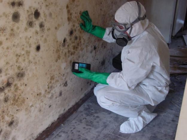 Mold Inspector Hard at Work