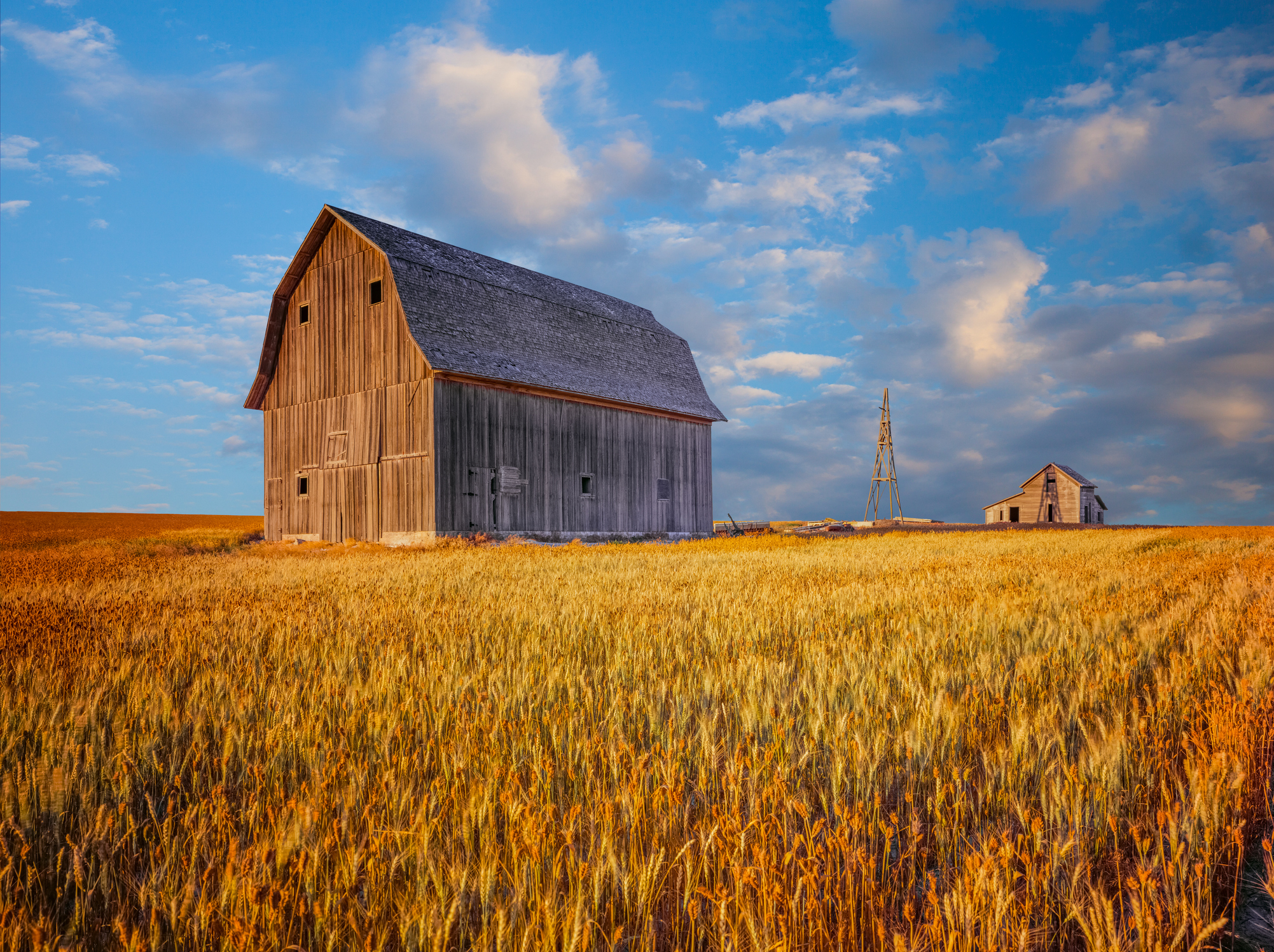 Barn in the wheat fields of Idaho
