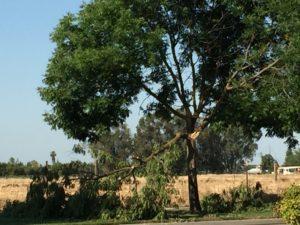 Tree trimming Fresno